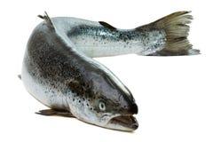 Salmones enteros aislados en blanco fotos de archivo