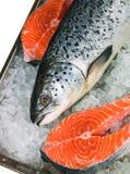 Salmones frescos Foto de archivo