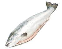 Salmones frescos imagen de archivo