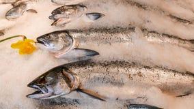 Salmones frescos enteros en el hielo en el mercado con el narciso Foto de archivo libre de regalías