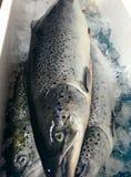 salmonfish Immagine Stock Libera da Diritti