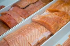 Salmoni Fotografia Stock Libera da Diritti