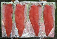 Salmoni fotografia stock