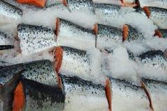 Salmoni Immagine Stock Libera da Diritti