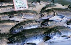 Salmoni di re Fotografia Stock Libera da Diritti