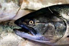 Salmoni di re Fotografie Stock Libere da Diritti
