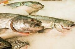 Salmoni freschi su ghiaccio fotografia stock