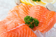 Salmoni su ghiaccio Immagini Stock