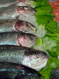 Salmons. Fresh fishes salmons Stock Photos