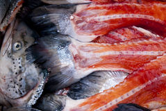 Salmons Στοκ εικόνα με δικαίωμα ελεύθερης χρήσης