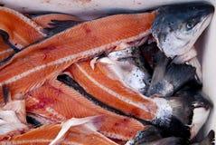 Salmons Royalty Free Stock Photo