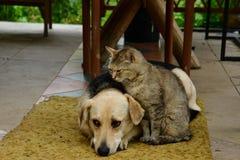 Salon de chat et de chien ensemble en tant que meilleurs amis Photo libre de droits