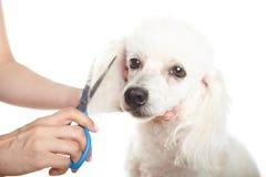Salon de coiffure de chien photo libre de droits