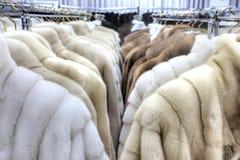 Salon on the sale of fur fur coats Stock Photos