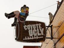 Salone brutto del coyote sulla via Memphis, TN di Beale Immagine Stock