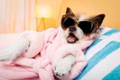 Salong för hundbrunnsortwellness Arkivfoto