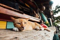 Salons somnolents rouges d'un chat sur un banc dans une barre près de la plage Image stock
