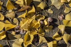 Salopa kolorów żółtych liście na ziemi obrazy stock