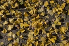 Salopa kolorów żółtych liście na ziemi zdjęcie royalty free