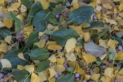 Salopa kolor żółty i zieleń opuszcza na ziemi fotografia stock