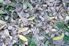 Salopa liście na trawie zdjęcie royalty free