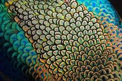Salopa zielony paw zdjęcie royalty free