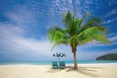 Salotto della palma Fotografia Stock