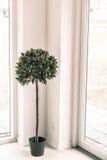 Salowa roślina w jaskrawym środowisku Zdjęcie Stock