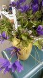 Salowa roślina Zdjęcie Royalty Free