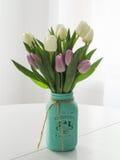 Salowi kwiaty z białym tłem Zdjęcia Stock