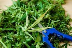 Salowi marihuana arymażu narzędzia fotografia royalty free