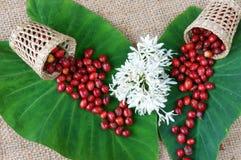 Salowy wystrój, kawowa fasola, cukierniany kwiat Obraz Royalty Free