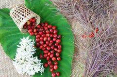 Salowy wystrój, kawowa fasola, cukierniany kwiat Fotografia Royalty Free
