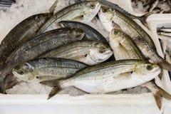 Salpa Sarpa για την πώληση στην ελληνική αγορά ψαριών Στοκ Φωτογραφία