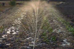 Salpica del agua durante la irrigación en luz del sol Adherencia de soldadura del suelo imagen de archivo libre de regalías