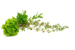Salsa, aipo, sábio, tomilho, alecrim, alface, especiarias frescas isoladas no fundo branco Fotografia de Stock Royalty Free