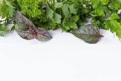 Salsa, aneto, aipo, tomilho, sábio do estragão do lovage da manjerona, lugar para o texto Imagens de Stock