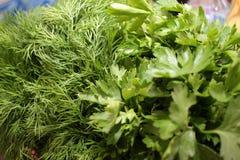 Salsa e aneto Ervas frescas, org?nicas, do jardim, do aneto e da salsa Vitaminas verdes detox Ervas arom?ticas para a salada Come imagens de stock