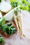 Salsa e Celera Imagens de Stock Royalty Free