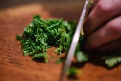 Salsa que cozinha o verde fresco do alimento aromatic fotografia de stock