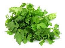Salsa verde Foto de Stock
