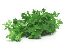 Salsa verde fresca Fotografia de Stock