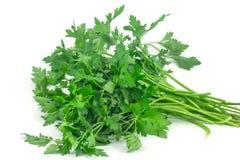 Salsa verde fresca isolada no fundo branco Fotografia de Stock