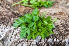 Salsa verde que encontra-se em uma superfície de madeira Imagens de Stock Royalty Free