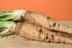 Salsify Stock Image