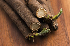 Salsify vegetables on wood Stock Images