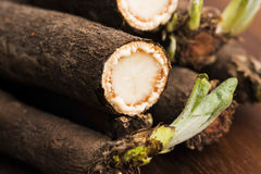 Salsify vegetables on wood Royalty Free Stock Image