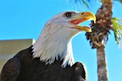 Salt河野马的第4每年摩托车乘驾,亚利桑那,美国 免版税库存照片