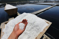 Salt Royaltyfri Bild