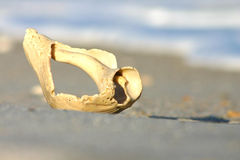 Salt Air. Shell in sand at Masonboro Island, Wilmington, NC Stock Images
